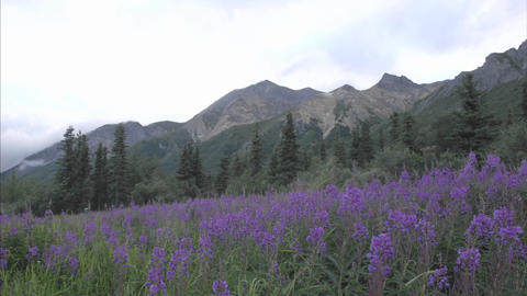 Time lapse of clouds blowing over Sheep Mountain, Alaska Stock Video Footage
