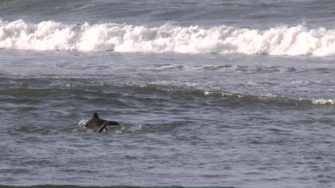 Zoom out of surfer paddling out at the mouth of the... Stock Video Footage