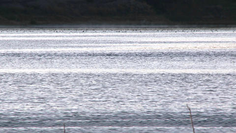 Two people rowing a double scull at sunrise on Lake... Stock Video Footage