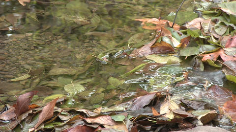 Close up rack focus of leaves in Wheeler Springs above... Stock Video Footage