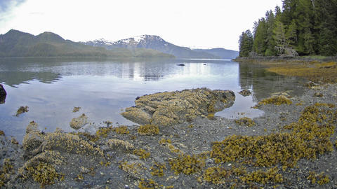 Fast time lapse with motion of the tide retreating on Pond Island next to Kelp Bay off of Baranof Is Footage