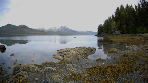 Time lapse of the tide retreating on Pond Island next to Kelp Bay off of Baranof Island in Southeast Footage