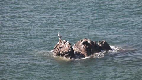Pelican on rock in ocean P HD 4713 Live Action