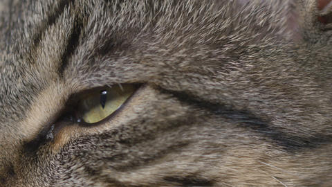 Close-up of young cat eyes Footage