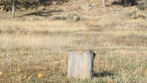 Pumpkin Explodes slow P HD 8061 Footage