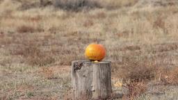 Pumpkin blasting gun explosion HD 0612 Footage