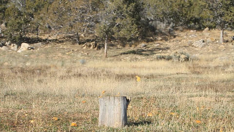 Pumpkin on stump shoot slow P HD 8062 Live Action