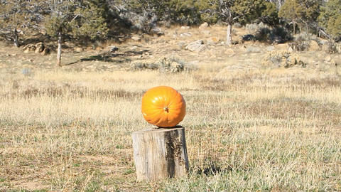 Pumpkin shoot with rifle slow P HD 8060 Live Action