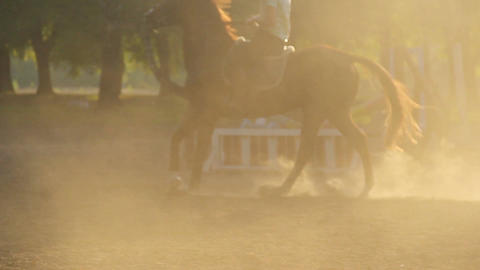 Coach teaching children how to ride horse, outdoor classes at horseriding school Footage