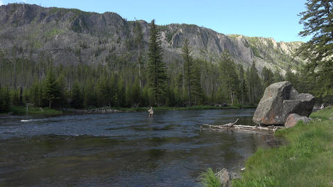Recreation sport fly fishing nature Yellowstone 4K Footage