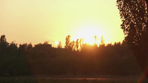 Rays of fantastic golden sunset penetrating tops of trees in beautiful park Footage