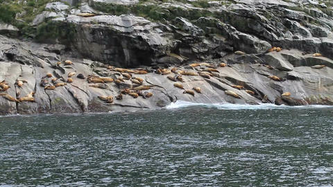 Seals from moving boat handheld P HD 1904 Footage
