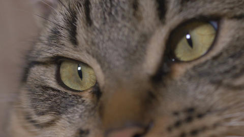 Close-up of young cat eyes watching TV Footage