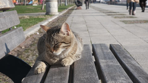 Lazy cat sleeping on a bench in a public park Live Action