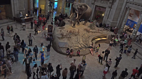 Smithsonian Natural History Museum education entrance 4K 079 Footage