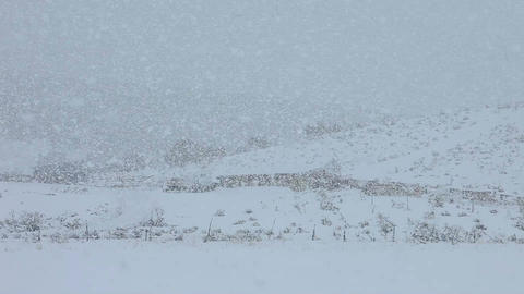 Snow blizzard on farm field hill P HD 8656 Live Action