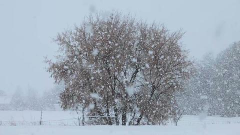 Snow blizzard farm tree P HD 8653 Footage