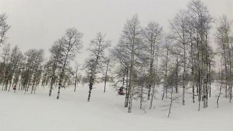 Snowmobiles mountain aspen forest HD 001 Footage