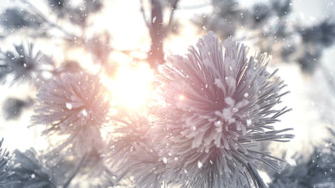Winter frost on spruce tree and snowfall close-up Footage