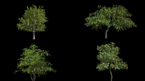 Mangrove with roots. Animation 3d. Blue screen alpha. Format MOV, codec png with alpha channel Animation