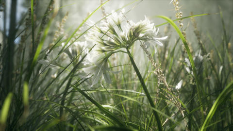 Grass flower field with soft sunlight for background Live Action