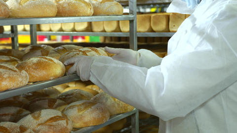 A baker in a bakery holds freshly baked bread. Production of bakery products Live Action