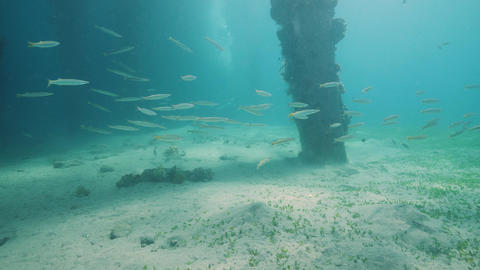 Nature underwater concept: A school of fish swimming underwater in blue sea Live Action