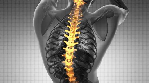 backbone. backache. science anatomy scan of human spine bones glowing with yello Animation