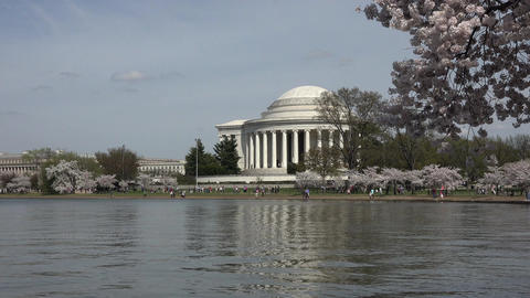 Washington DC Jefferson Memorial cherry blossoms 4K 039 Footage