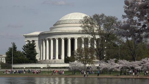 Washington DC Jefferson Monument cherry blossoms 4K 045 Footage