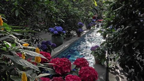 Washington DC National Botanical Garden fountain flowers 4K Footage