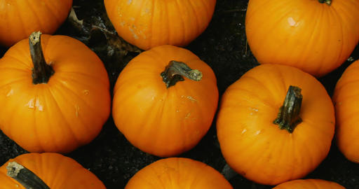 Slow motion top view pan of harvested pumpkins Live Action