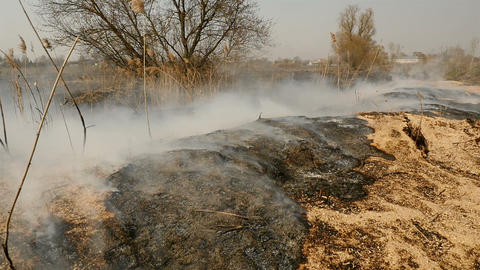 Scorched earth with grass on the field. Natural disaster. Environmental disaster Live Action