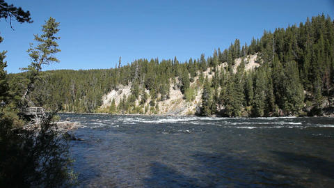 Yellowstone River forest P HD 2631 Footage