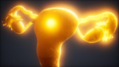 Female Reproductive System Anatomy Acción en vivo
