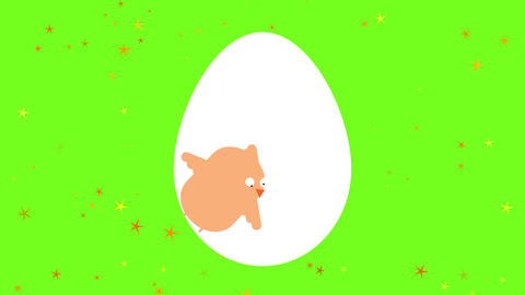 cute childish drawing of a baby chicken hatching from its eggshell on a starry colorful background Animation