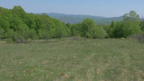 Pasture, forest, hills and sky panning movement Live Action