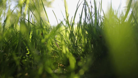 Closeup view of beautiful fresh green grass outside isolated Slow Motion Live Action