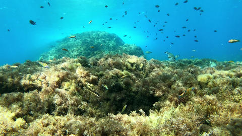 Underwater landscape - Reef view from the seabed - scuba dviing in Balearic Islands Live Action