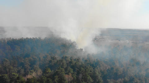View from the top of the forest that is burning. A fire that burns in a dry ライブ動画