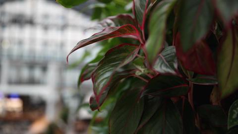 Green plants in the hotel. Indor shot ライブ動画