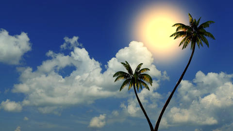 Sun and palm trees on the beach near the sea, time-lapse Animation