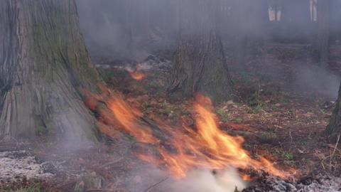 Fire takibi V1-0007 Footage