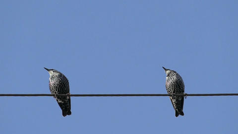 Birds Sitting On On A Wire And Fly Away Footage