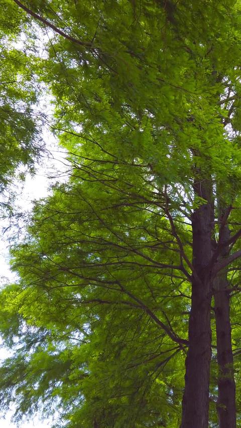 Trees_portrait Live Action