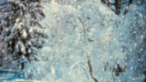 Snow in the woods forest in winter. Snow trees branches daytime Live Action