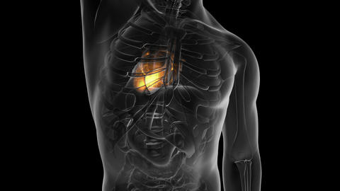 science anatomy scan of human heart glowing with yellow Animation