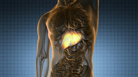 science anatomy scan of human liver glowing with yellow Animation