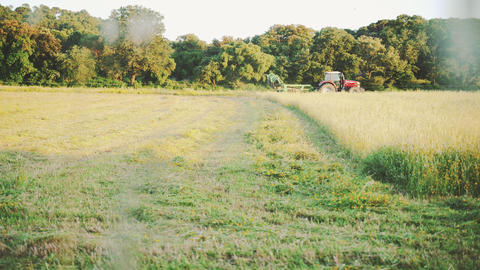 The harvester harvests wheat on the field. Haymaking. Harvesting. Golden sunset Live Action