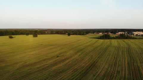 beautiful aerial shot, flying over yellow country field, drone, top view, shot Live Action